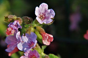 Frühlingsblume von Marije Zwart