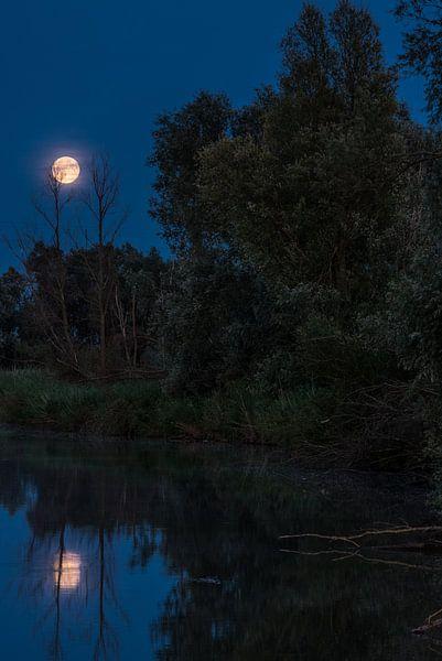 Volle maan van Sander Strijdhorst