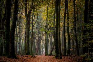 Sentier étroit dans la forêt sur Costas Ganasos
