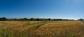 Gerstenfeld in Middelhagen, Insel Rügen von GH Foto & Artdesign