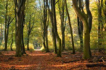 Tanzende Bäume im Herbst von Cor de Hamer