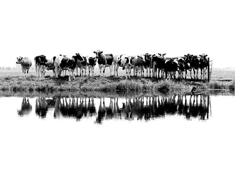 Kühe in einer Reihe (schwarz/weiß) von Annemieke van der Wiel