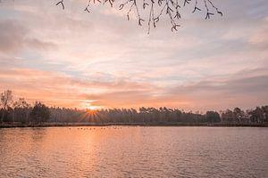 Sonnenaufgang an einem Moor in der Heide mit kanadischen Gänsen