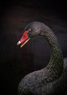 Zwarte zwaan van Lisette van Peenen