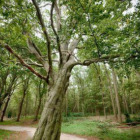 Arbre dans la forêt sur Mark Bolijn