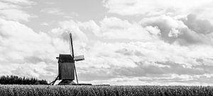 Alte Mühle von Nancy Bogaert