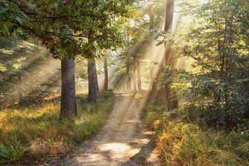 Verträumt Wald von Cor de Hamer