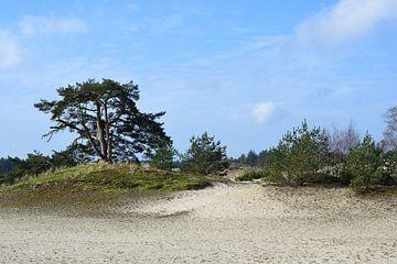 Natuur op een zandverstuiving van Gerard de Zwaan