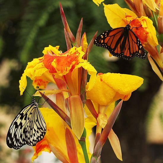 The Two Butterflies van Cornelis (Cees) Cornelissen