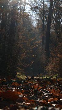 Herfst vibes van Jacco Aalbers