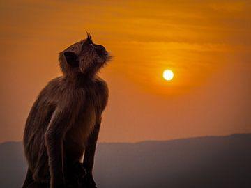 Een aap van adel van Rik Pijnenburg