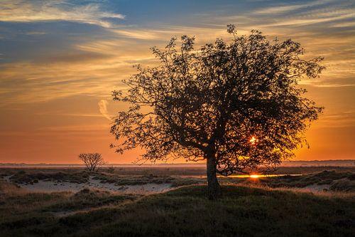 Boom tijdens Zonsopkomst Dwingelderveld Drenthe
