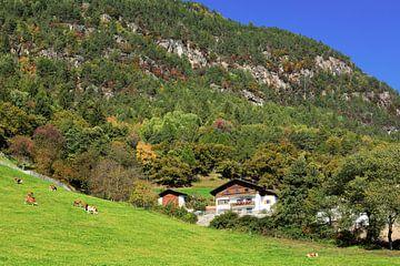 Autumn on the Ritten van Gisela Scheffbuch