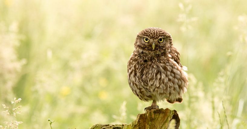 One legged owl van Gerrit Last