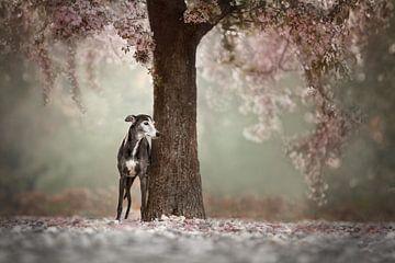 Unter dem Blütenbaum von Nuelle Flipse