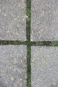 Kruis van