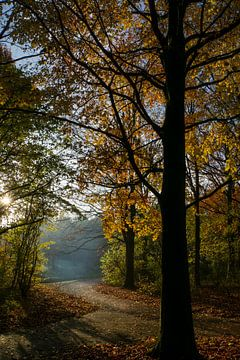 Doorkijkje tussen de bomen van Willian Goedhart