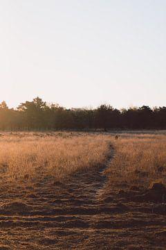 Weg zum Unbekannten auf der Heide von Robin van Steen
