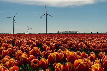 Ein Tulpenfeld in Nordholland mit Windturbinen und den Bauern, die die Tulpen kontrollieren von Anges van der Logt