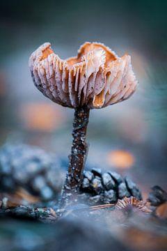 Regenschirm-Pilz von Jayzon Photo