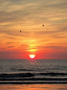 Meeuwen voor de ondergaande zon.