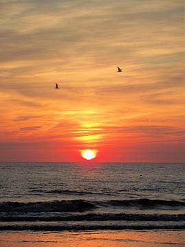 Meeuwen voor de ondergaande zon. van Il se