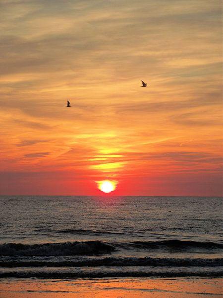 Meeuwen voor de ondergaande zon. sur Il se
