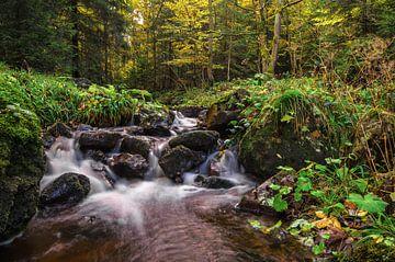 Herbst im Harz von Steffen Gierok