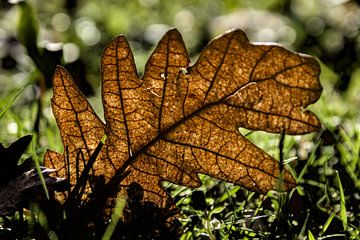 Gefallene Herbstblätter im Gras von Hannon Queiroz