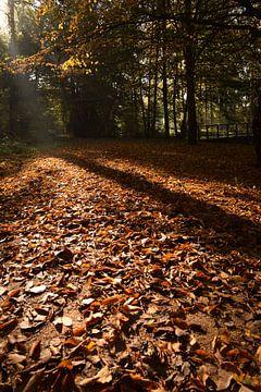 Herfst in het Wilderpak von Maarten Honinx