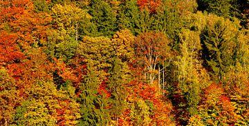 Forêt d'automne sur Thomas Jäger