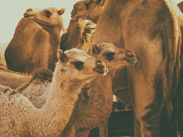 Jonge Kamelen von Aad Clemens