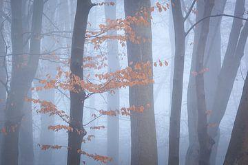 Bäume im Nebel II von Thijs Friederich