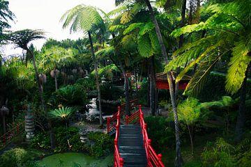 Botanischer Garten in Funchal von jonathan Le Blanc