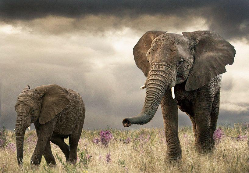 Elefantenmutter und Kalb von Marcel van Balken