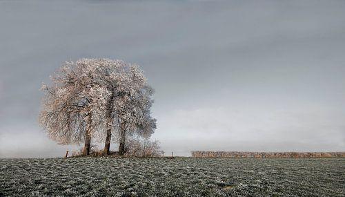 Winter Tree von -Léon -