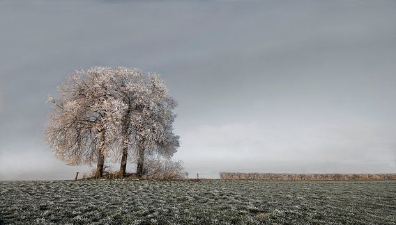 Winter Tree van -Léon -