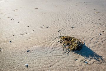 Gewaschene Pflanzenreste am Strand von Ruud Morijn