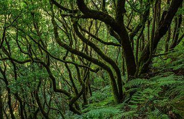 El Bosque Encantado van Joris Pannemans - Loris Photography