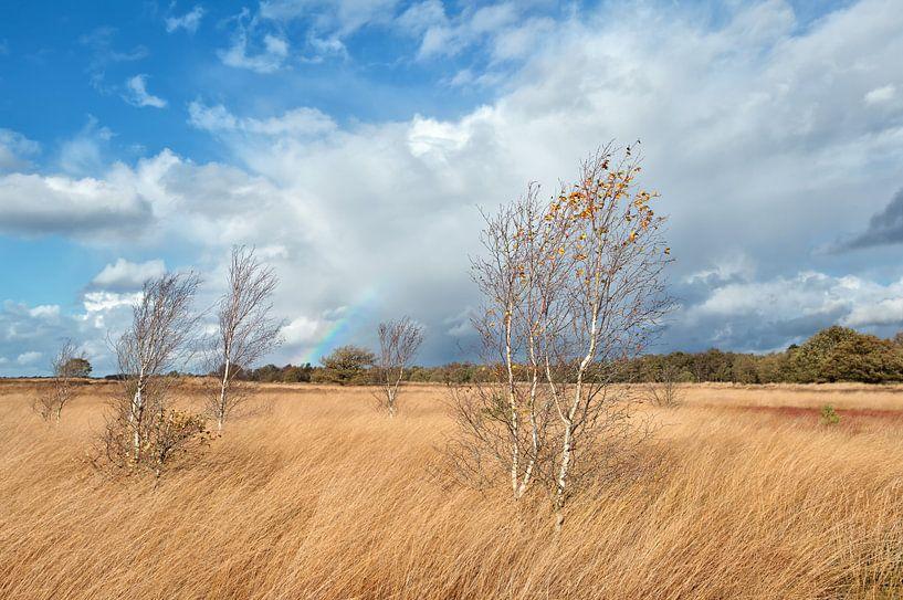 Autumn atmosphere van Olha Rohulya