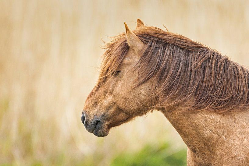 Paard van Visueelconcept