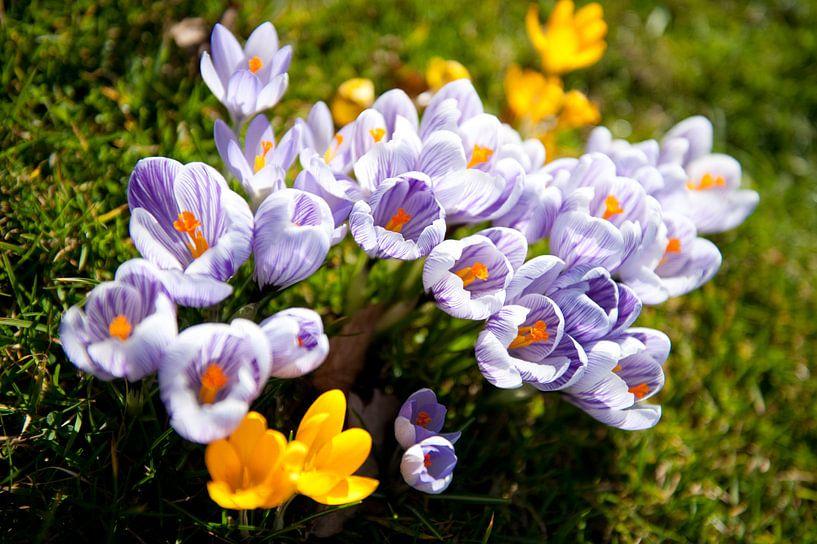 Spring is coming! van Sander van Leeuwen