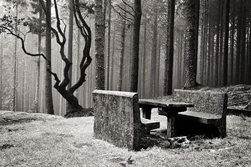 Bench in mysterious forest von