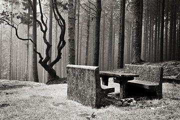 Bankje in mysterieus bos van