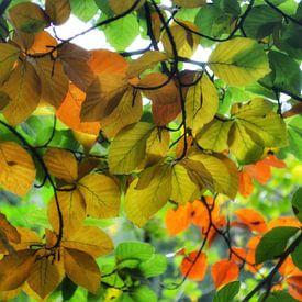 Kleurrijke herfstblaadjes aan de boom van Joyce Derksen
