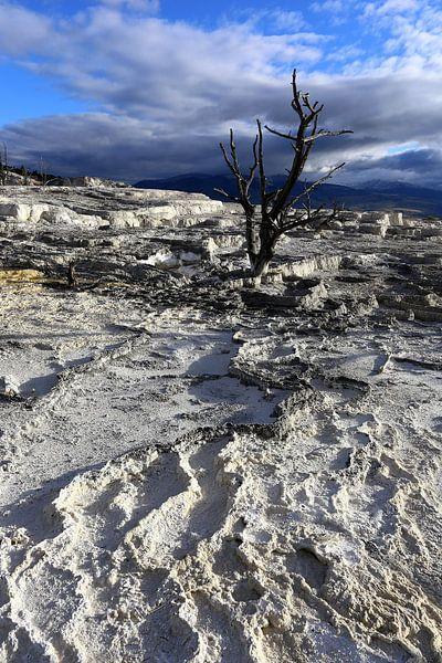Dode boom in Yellowstone van Antwan Janssen