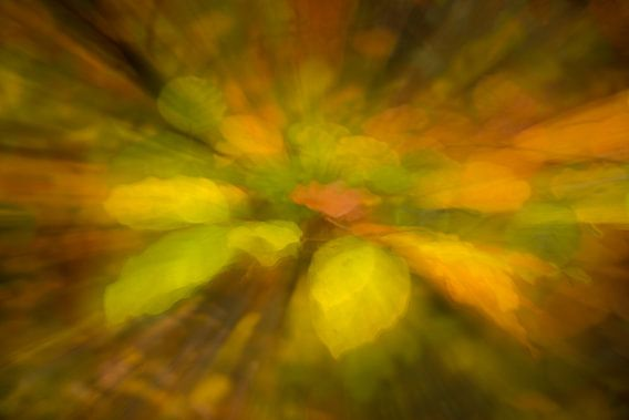 Vuurwerk van herfstkleuren