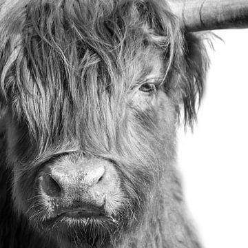 Schotse Hooglander in zwart-wit van Marco Leeggangers