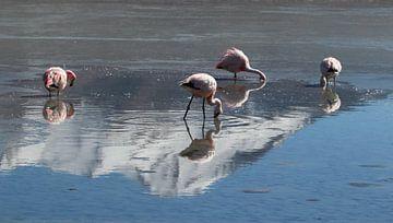 flamants roses dans un lac salé sur Marieke Funke