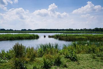 Landschap met moerassen in de Weerribben bij Giethoorn van Henk Vrieselaar